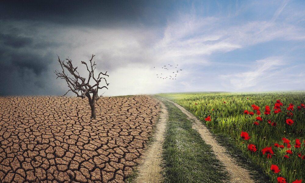 MakerDAO 임원은 기후 변화를 해결하기 위해 Ethereum으로 돌아가고 싶어합니다.